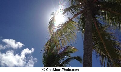 Coconut palm tree in sunny day