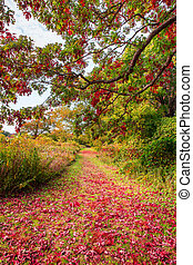 Nature Path - Colorful park hiking path with red leaves on...