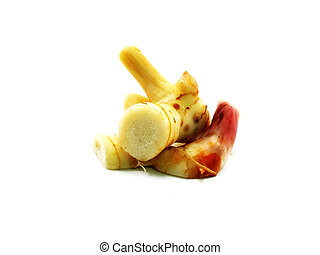 herb galangal on white background
