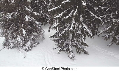 AERIAL: Snowy forest.