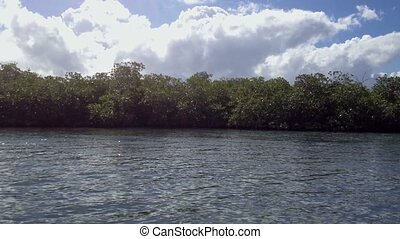 Mangrove tree in a sea at sunny day