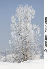 Tree covered with hoarfrost and snow in winter on forest background
