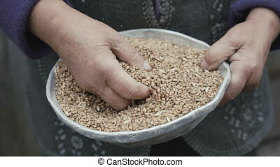 Close up of wrinkled old woman's hands stirring the grains...