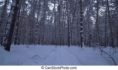 Jogging on beautiful winter forest stock footage video