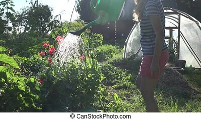 young woman watering decorative poppy garden at summer day.