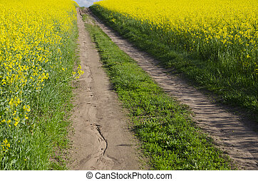 rural road and blossoming rapeseed fields - rural gravel...