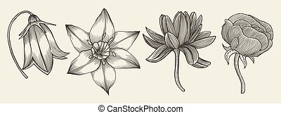 Sketch of wild flowers, hand drawn isolated on a beige...