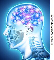 orgánico, interno,  -, humano, cerebro