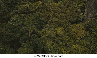 Tropical rainforest in the mountains, aerial view. -...