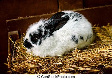 small white rabbit sitting on straw - picture a small white...