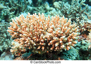 White coral at the bottom of the red sea. Underwater photography.
