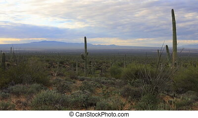Timelapse of wide view in Tucson Mountain Park - A Timelapse...