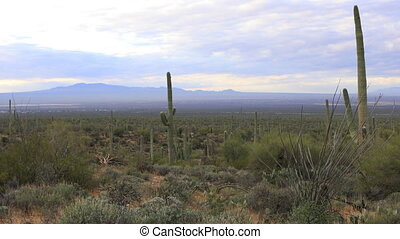 View in Tucson Mountain Park - A View in Tucson Mountain...