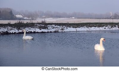 Two swans in the water near the waterwindmill - The three...