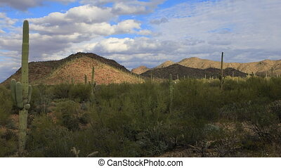 Wide view in Tucson Mountain Park - A Wide view in Tucson...