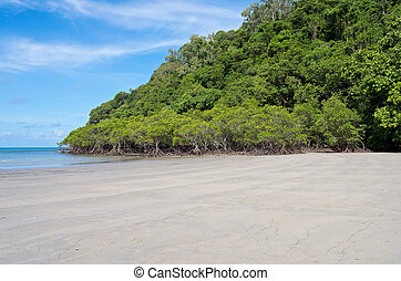 Beach and Mangrove Forest on Coral Sea - mangrove forest and...