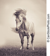 gray andalusian stallion playing in the myst. colorful tones