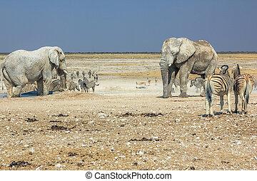 Etosha zebras elephants - wild animals: zebras elephants...