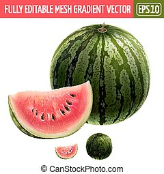 Watermelon on white background. Vector illustration -...
