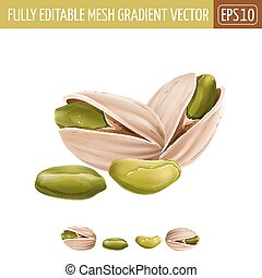 Pistachio nuts on white background. Vector illustration -...