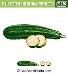 Zucchini on white background. Vector illustration