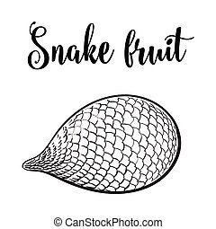 Whole unpeeled, uncut tropical salak, snake fruit in...