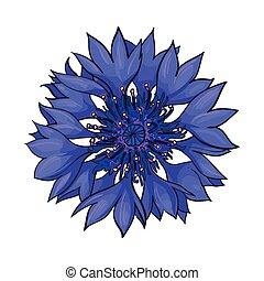 Open cornflower blossom, top view, sketch style vector...