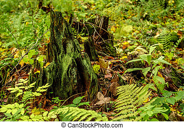 Stump with moss in the forest - Close up scenic image of...