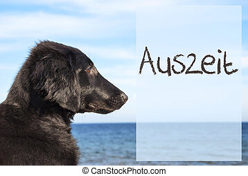 Dog At Ocean, Auszeit Means Downtime - German Text Auszeit...