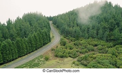 Aerial View of the Mountain Evergreen Forest with Fog -...