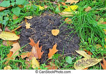 Molehill in grass - Molehill and grass in autumnal rural...