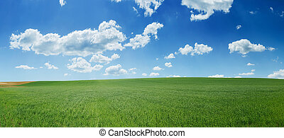 Green wheat field and blue sky panorama - Fresh green wheat...