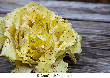 Castelfranco radicchio lettuce - Vegetable Castelfranco...