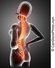 Women Feeling the Back pain - 3d Illustration of Women...