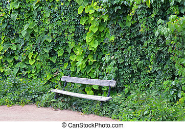 Creeper plant and wooden bench - Old wooden bench and...