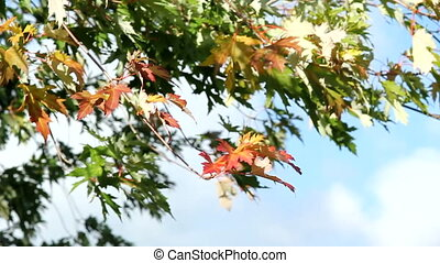 early autumn foliage