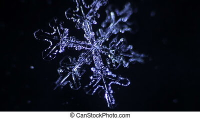 snowflake on a black background melts. real time shot