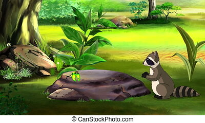 Raccoon and Butterfly - Curious Raccoon Saw a Butterfly in a...