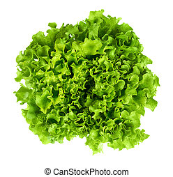 Batavia head of lettuce from above on white background. Also...