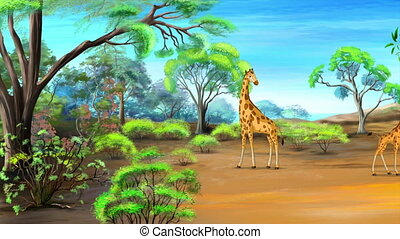 African Giraffe grazing in the savannah in a sunny summer...