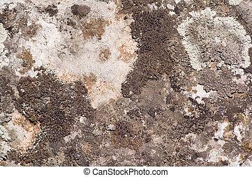 Lichen background - Lichen on a stone. Macro shot, flat...
