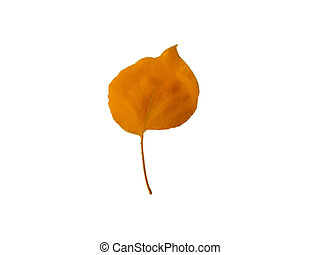 a leaf of the tree on a white background