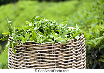Tea Leaf Basket - Image of a tea leaf basket used for...