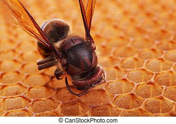被隔离, 大黃蜂