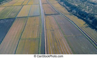 Aerial Flight Above Rice Fields, Portugal