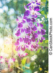 Orchid see through glass. - Orchid purple see through glass...