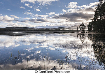 Loch Garten in the Cairngorms National park. - Loch Garten...
