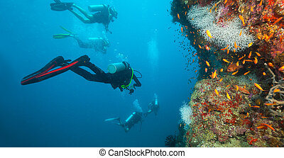 Group of scuba divers exploring coral reef, Maldives atolls,...
