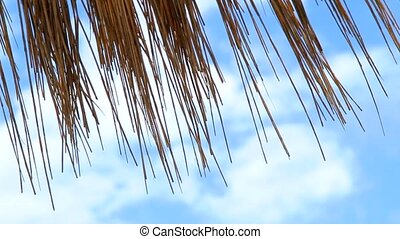 Several Rows Of Beach Umbrellas Straw - The beach with...