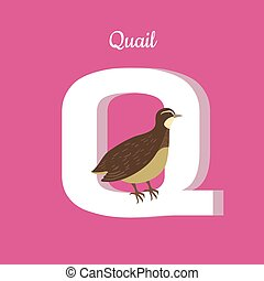 Animals Alphabet. Letter - Q
